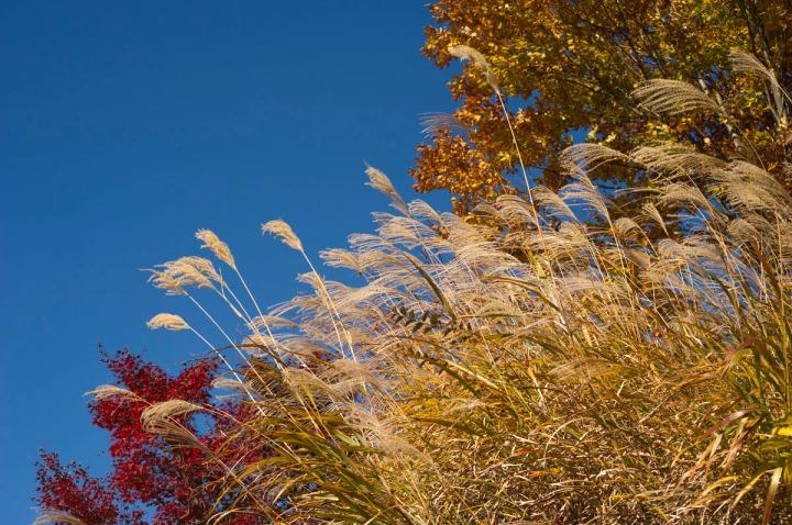 takaosan_autumn_leaves_8523