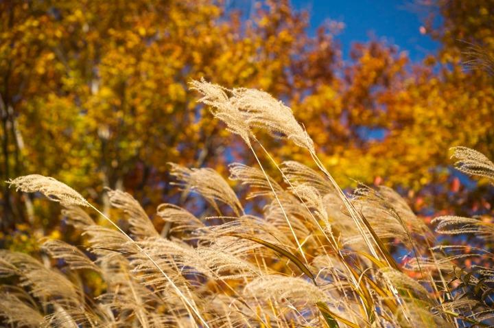 takaosan_autumn_leaves_8562