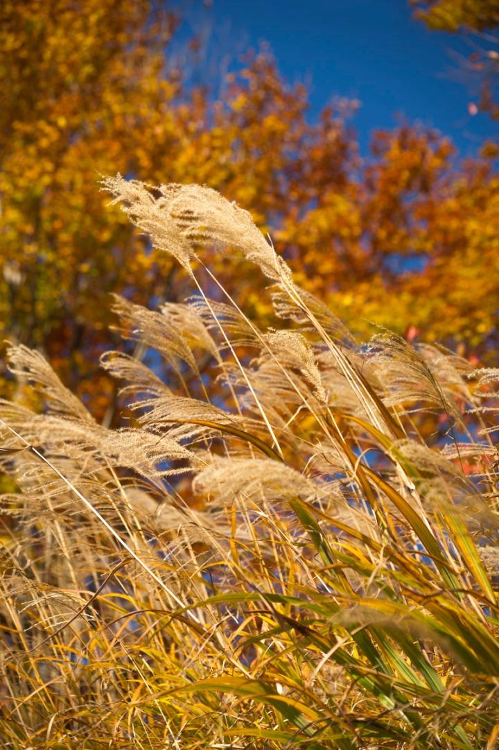 takaosan_autumn_leaves_8578