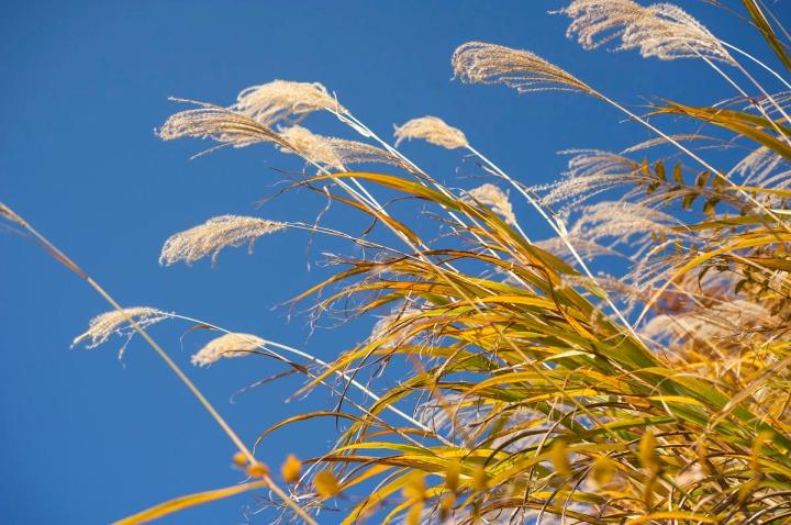 takaosan_autumn_leaves_8588