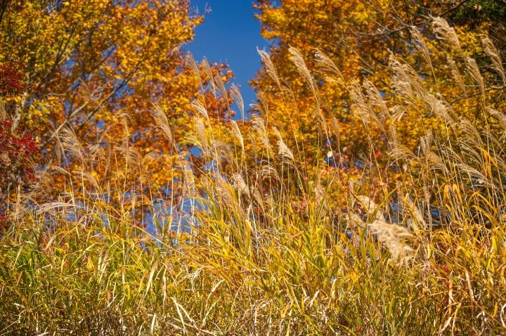 takaosan_autumn_leaves_8610