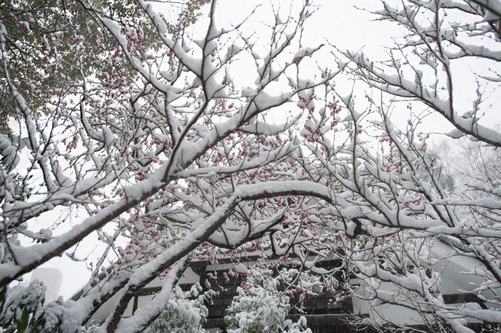 snow_chinzanso_garden_2526