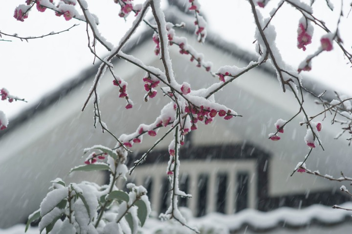 snow_chinzanso_garden_2539