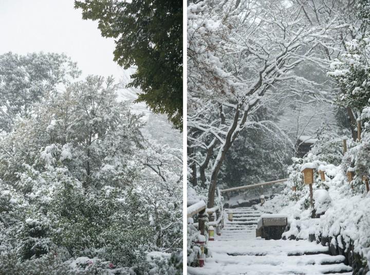 snow_chinzanso_garden_2565