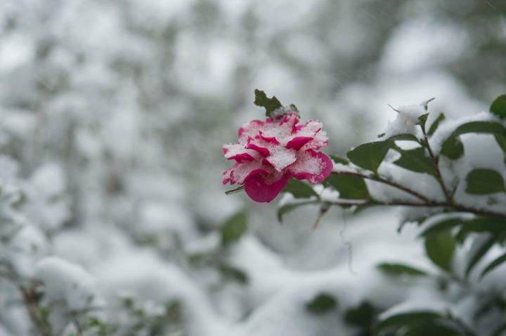snow_chinzanso_garden_2577