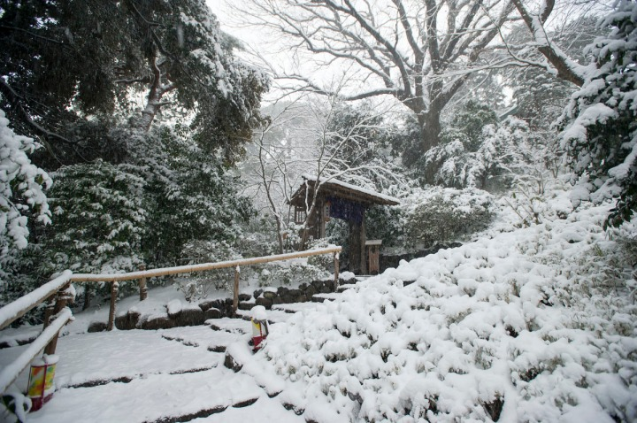 snow_chinzanso_garden_2604