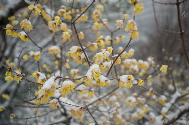 snow_chinzanso_garden_2656