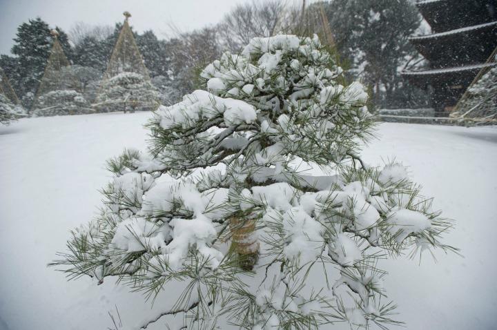 snow_chinzanso_garden_2679