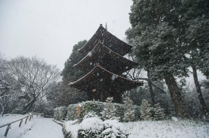 snow_chinzanso_garden_2687