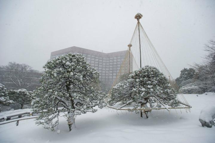 snow_chinzanso_garden_2688