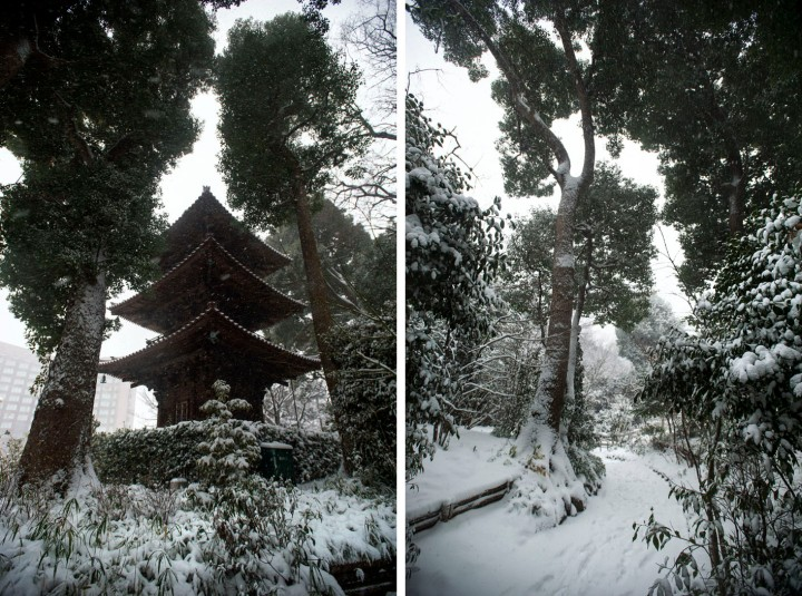 snow_chinzanso_garden_2696