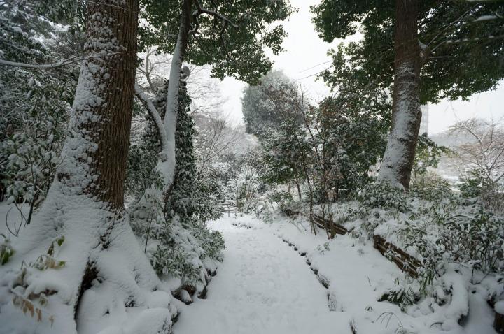 snow_chinzanso_garden_2711