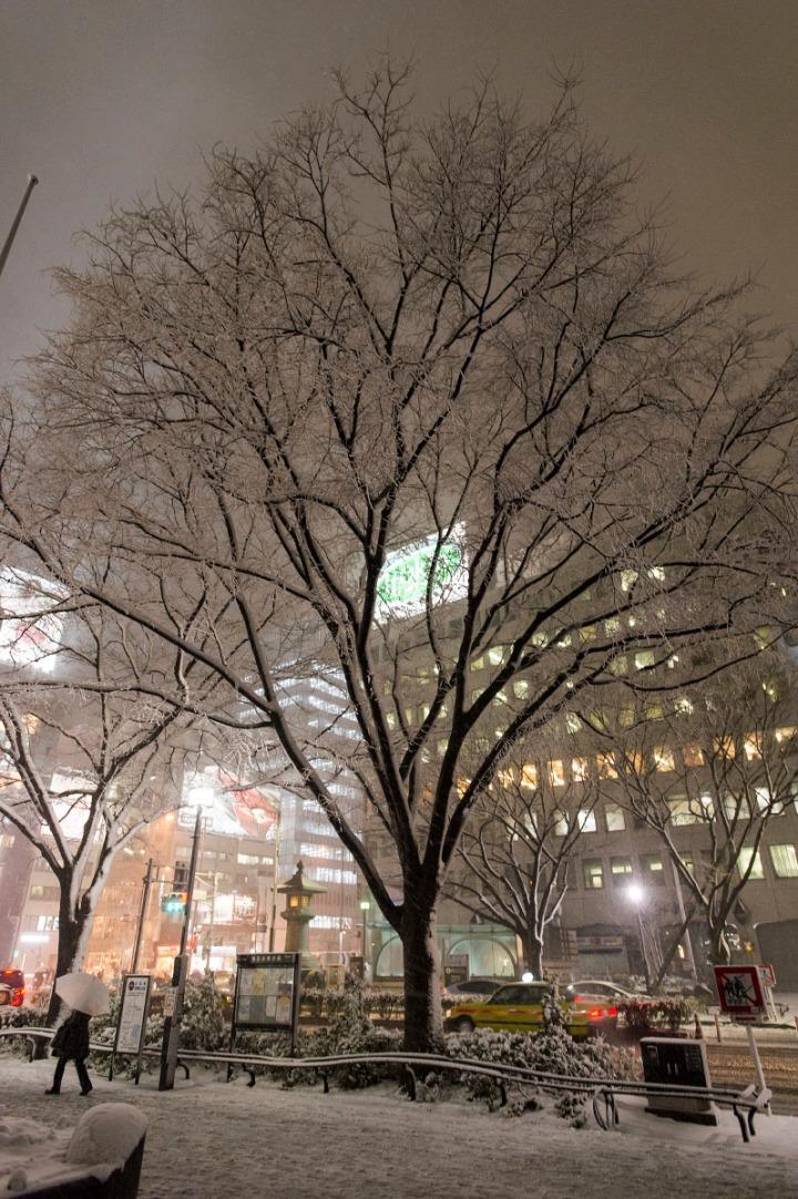 snowy_omotesando_3287