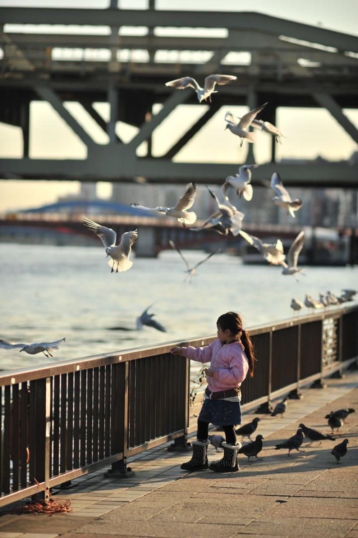 gulls_sumida_river_7494