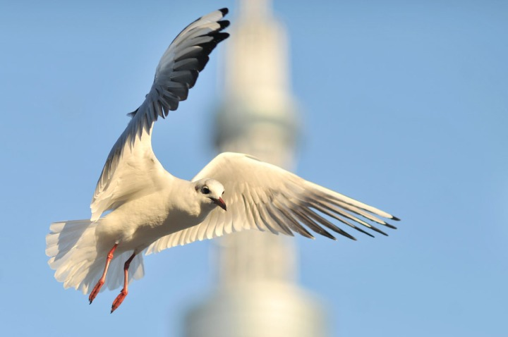 gulls_sumida_river_7567