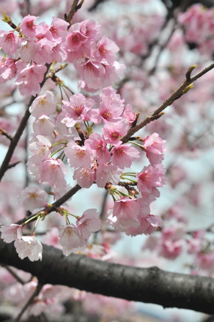 hibiya_park_spring_8129