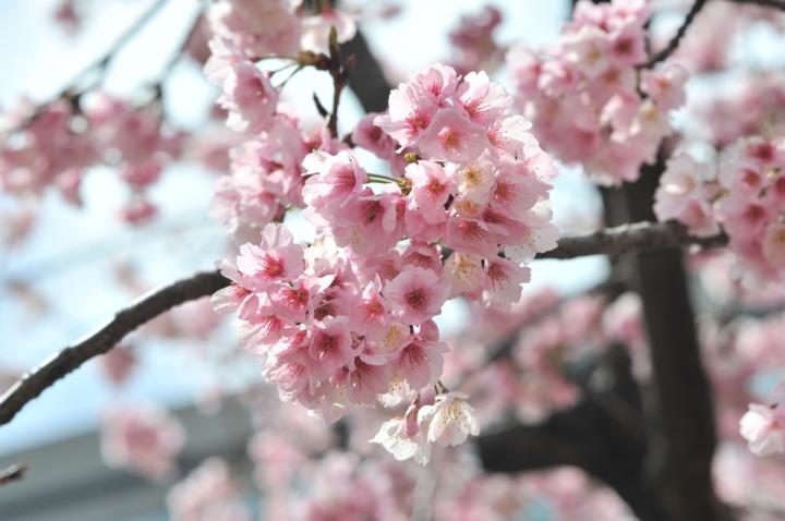 hibiya_park_spring_8142