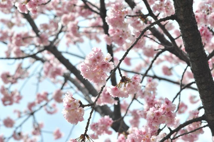hibiya_park_spring_8144