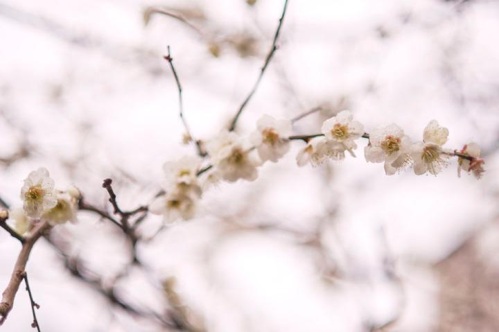 umematsuri_yushima_5661