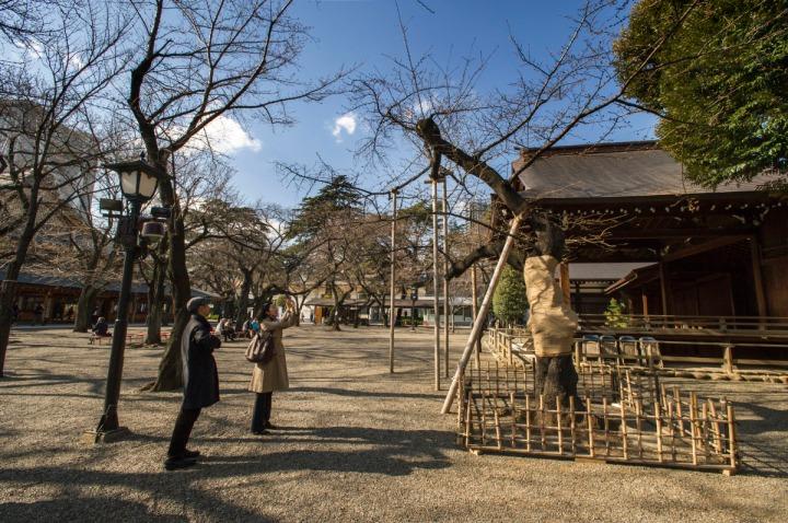 yasukuni_shrine_sakura_8918