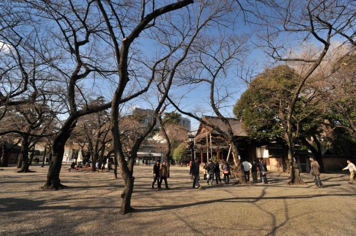 yasukuni_shrine_sakura_8922