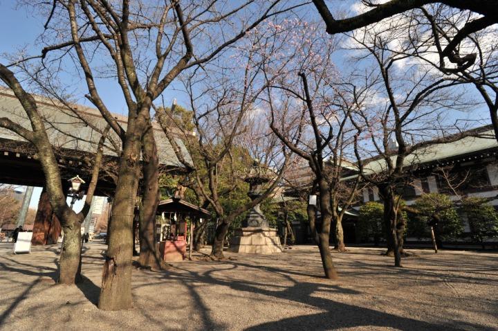 yasukuni_shrine_sakura_8925