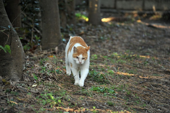 enoshima_animals_0869