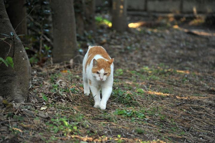 enoshima_animals_0869