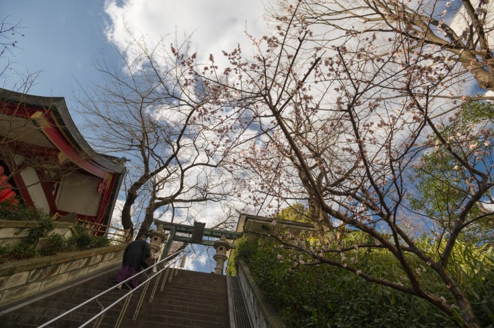 Ichigayakameokahachimangu_8954