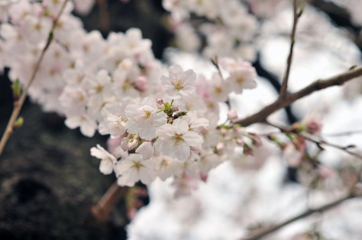 kawagoe_little_edo_0277