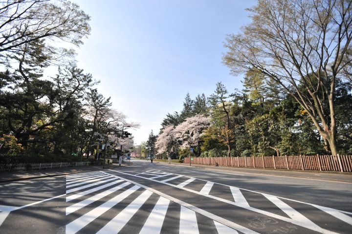tokyo_sakura_1378