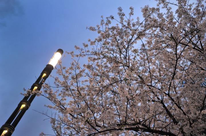 ginza_spring_sunset_1582