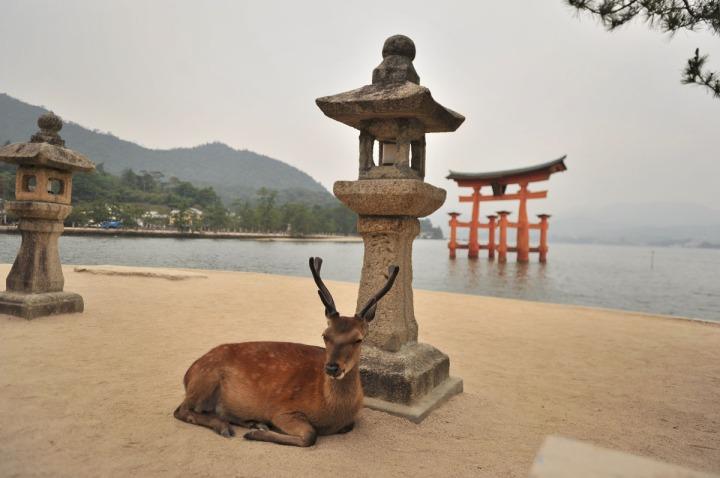 itsukishima_shrine_miyajima_torii_6706