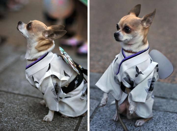 sanjamatsuri_dogs_1446