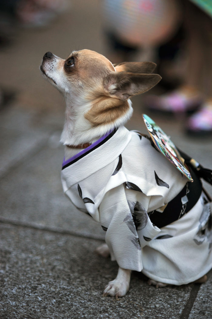 sanjamatsuri_dogs_1478