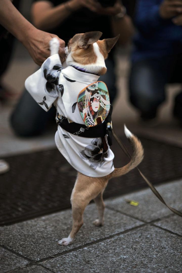 sanjamatsuri_dogs_1482