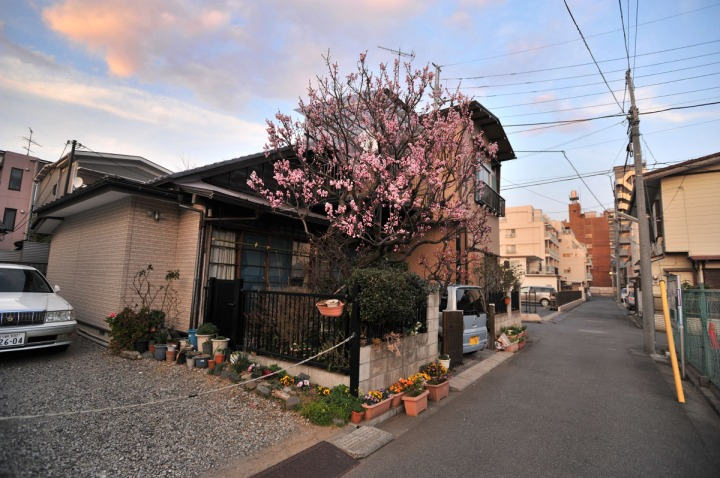 shinmaruko_walking_7820