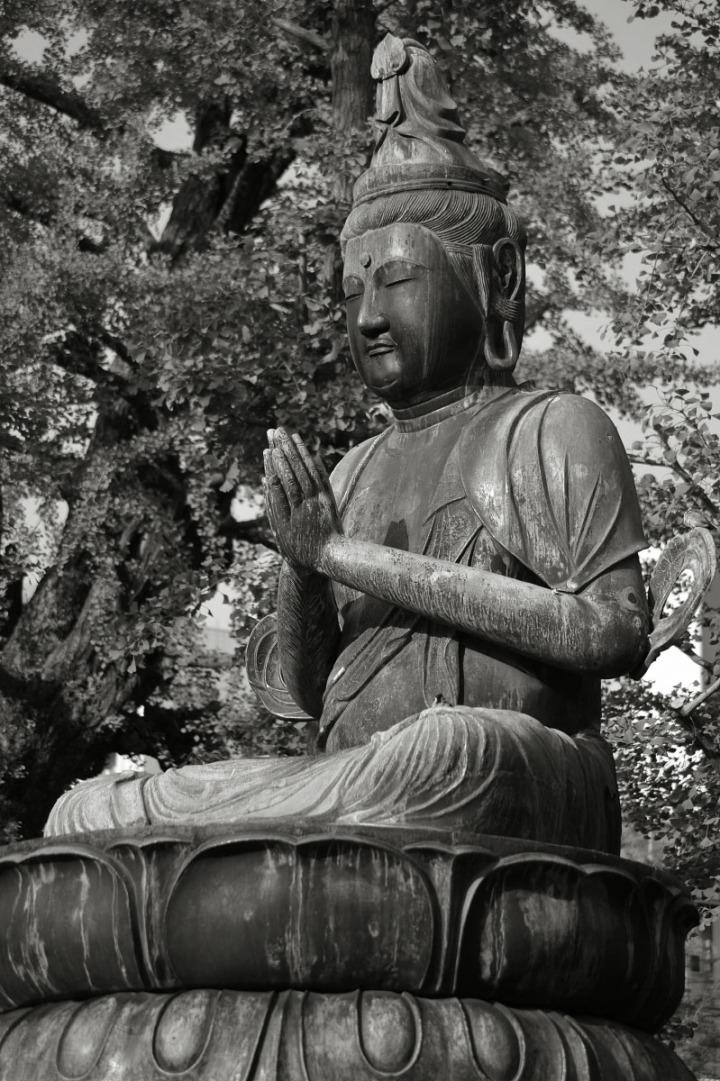 statues_buddha_asakusa_birds_8325