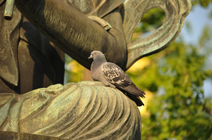 statues_buddha_asakusa_birds_8336
