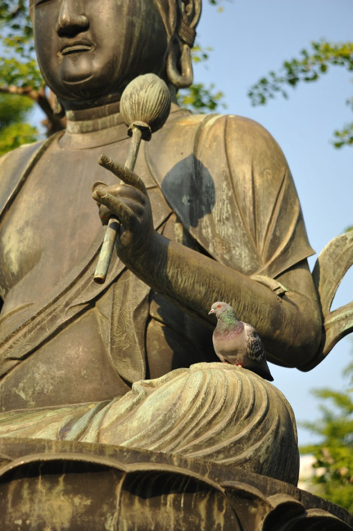 statues_buddha_asakusa_birds_8344