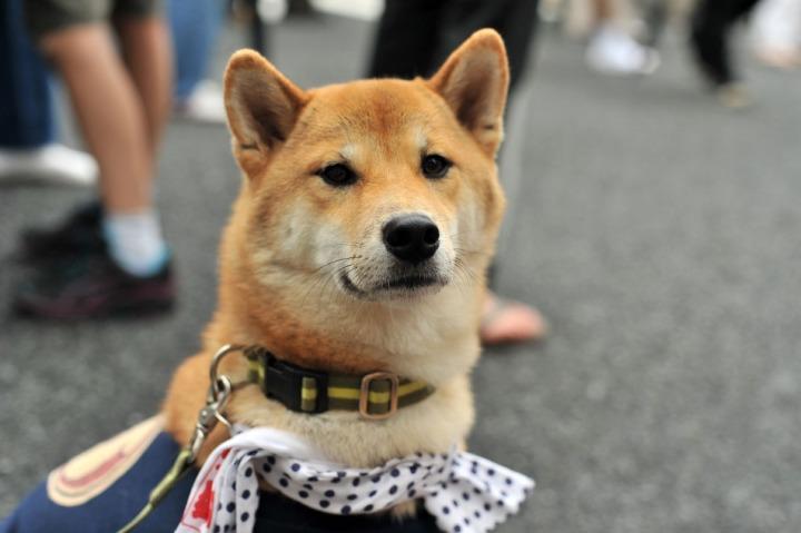 Matsuri_Dog_Kitazawahachiman_9488