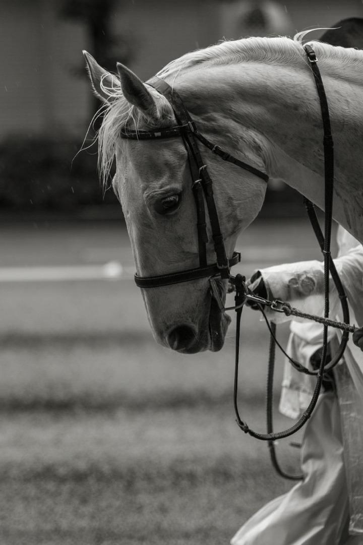 kanda_matsuri_horse_1445