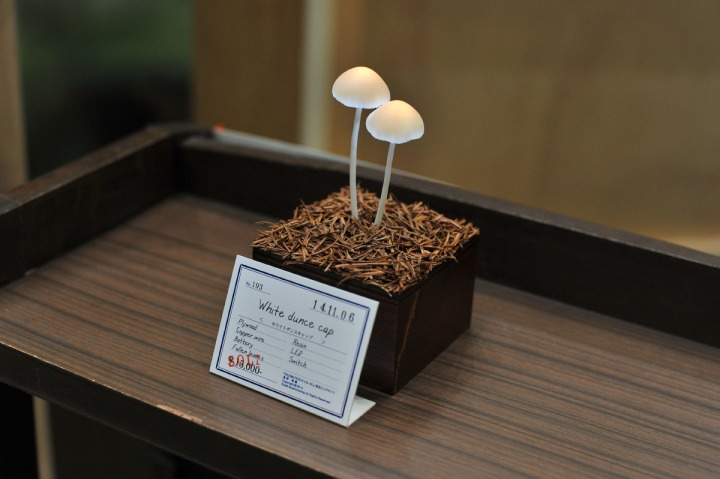 great_mushrooming_led_2014_4462