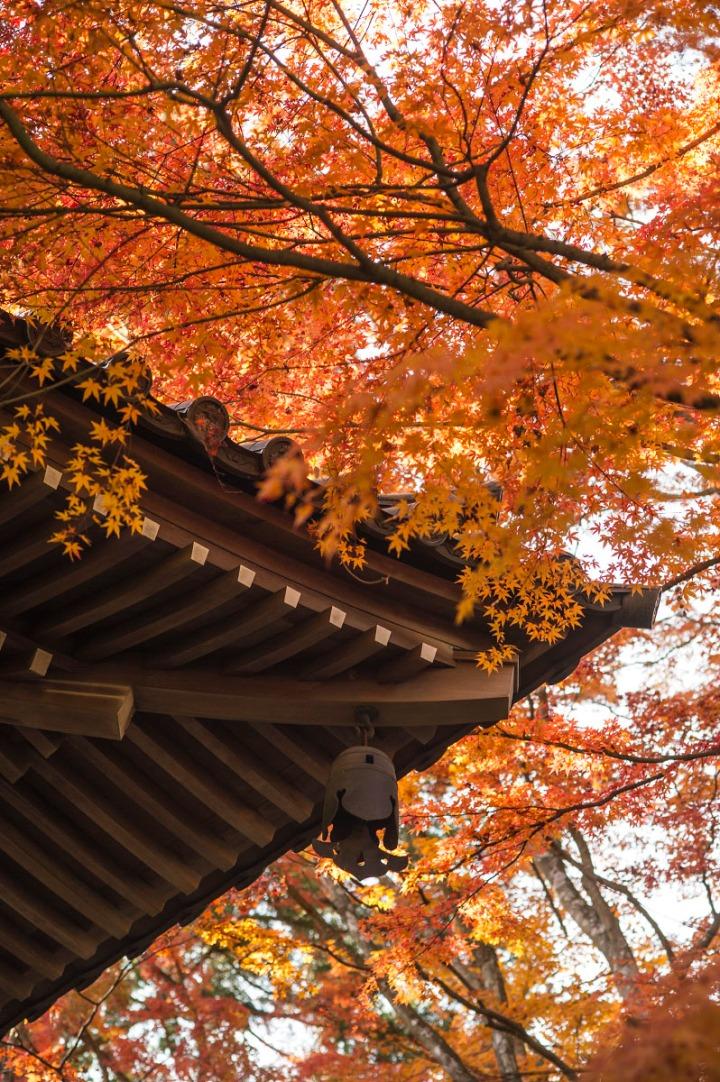 mount_takao_temple_8876