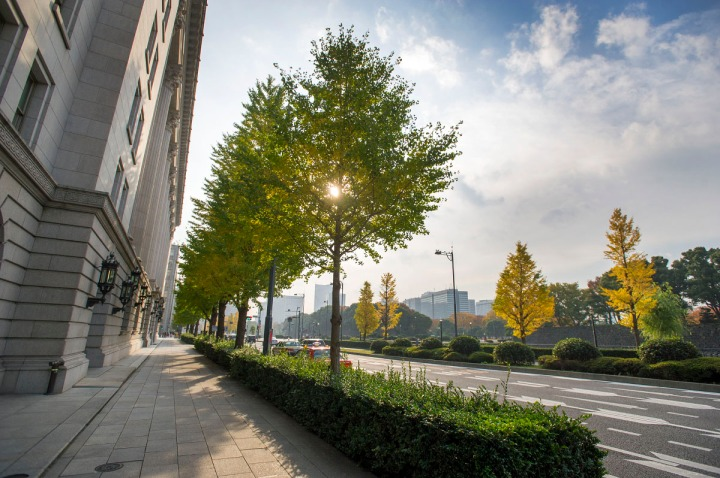 imperial_palace_park_autumn_colors_6597