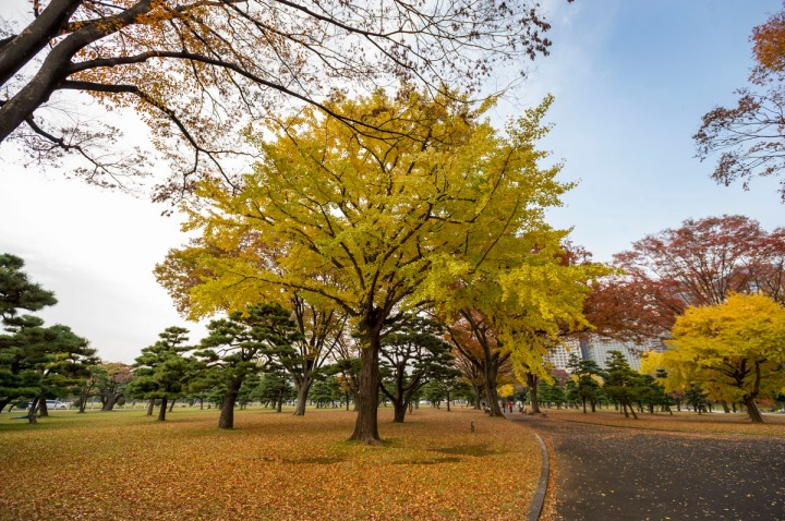 imperial_palace_park_autumn_colors_6631