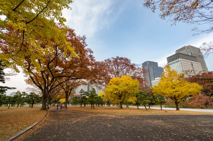 imperial_palace_park_autumn_colors_6632