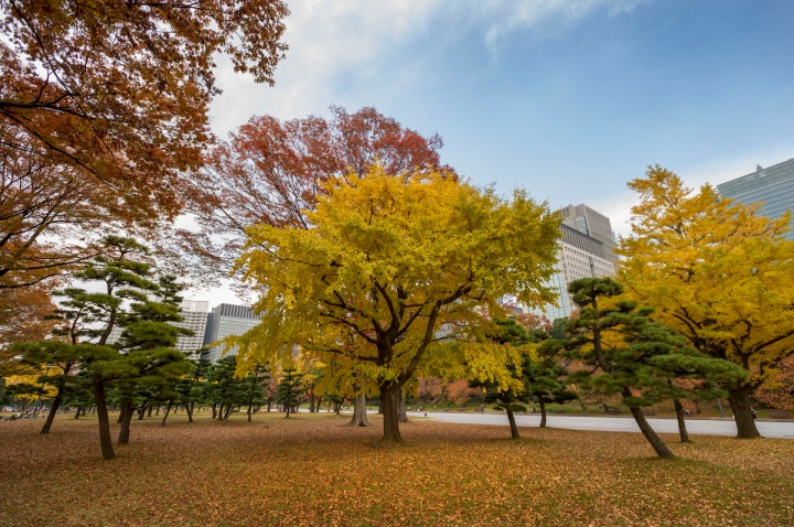 imperial_palace_park_autumn_colors_6636