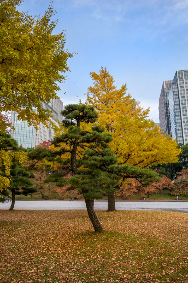 imperial_palace_park_autumn_colors_6641