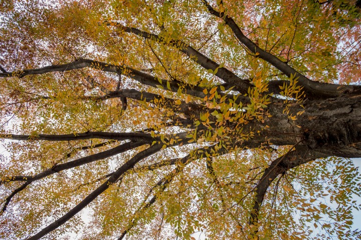 imperial_palace_park_autumn_colors_6645